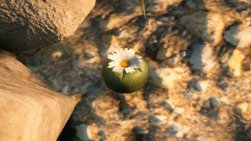 Как найти кактус пейот?