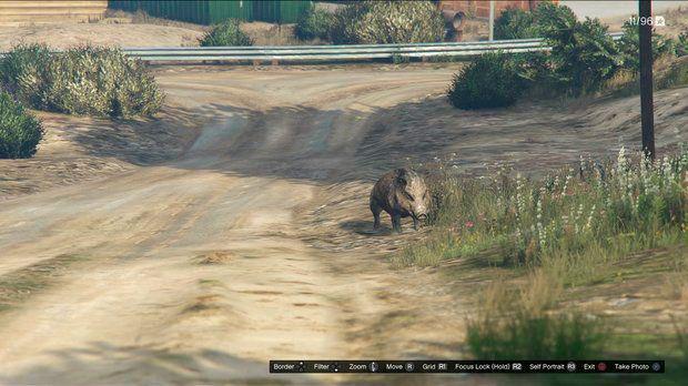 Кабан в GTA 5