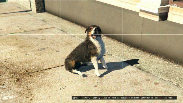 Овчарка в GTA 5