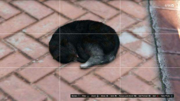 Кошка в GTA 5