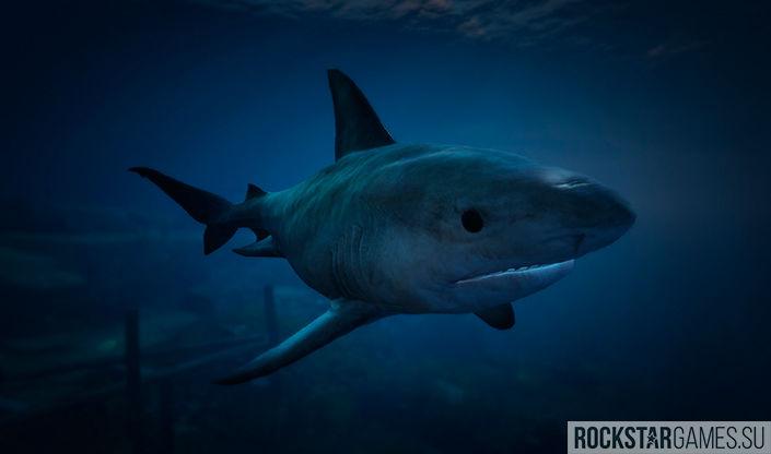 Акулы - опасные хищники GTA